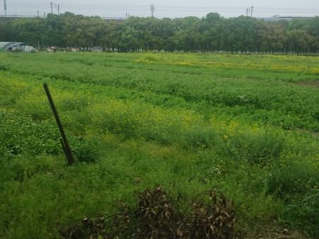上海安亭约200亩农业土地寻找合伙人或出租